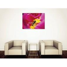 Tablou Canvas Flori Craiova - Albina polenizand - Persona Design