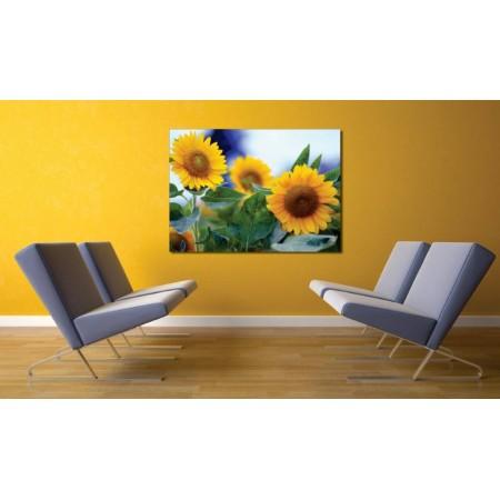 Tablou Canvas Flori Craiova - Camp de floarea soarelui - Persona Design