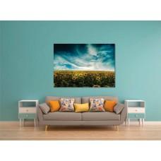 Tablou Canvas Flori Craiova - Campul de floarea soarelui - Persona Design