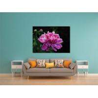 Tablou Canvas Flori Craiova - Floarea inflorita - Persona Design