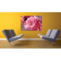 Tablou Canvas Flori Craiova - Floare roz - Persona Design