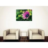 Tablou Canvas Flori Craiova - Floarea violet - Persona Design