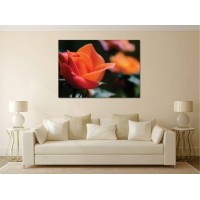 Tablou Canvas Flori Craiova - Laleaua portocalie - Persona Design