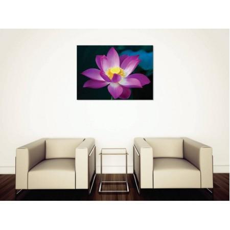 Tablou Canvas Flori Craiova - Lotusul indian - Persona Design