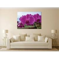 Tablou Canvas Flori Craiova - Orhidee inflorite - Persona Design