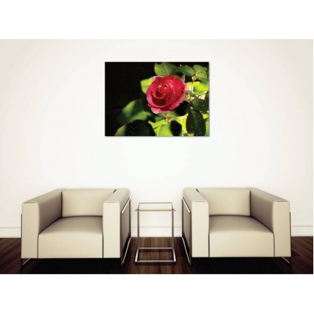 Tablou Canvas Flori Craiova - Roua pe trandafir - Persona Design