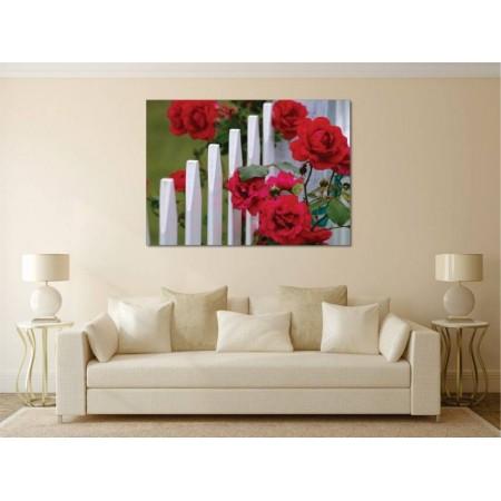 Tablou Canvas Flori Craiova - Trandafiri pe gard - Persona Design