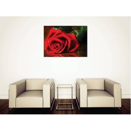 Tablou Canvas Flori Craiova - Trandafirul rosu aprins - Persona Design