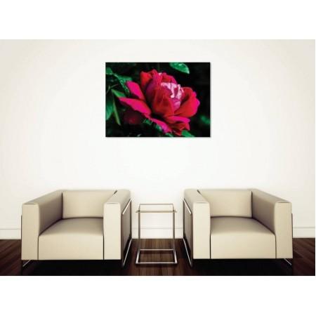 Tablou Canvas Flori Craiova - Trandafirul inflorit - Persona Design