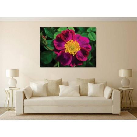 Tablou Canvas Flori Craiova - Trandafirul Nootka - Persona Design