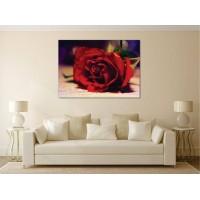 Tablou Canvas Flori Craiova - Trandafirul rosu - Persona Design