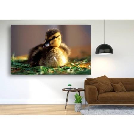 Tablou Canvas Animale Craiova -  Bobocul- Persona Design