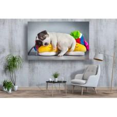 Tablou Canvas Animale Craiova -  Cainele cu botosei- Persona Design