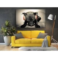 Tablou Canvas Animale Craiova -  Cainele meloman- Persona Design
