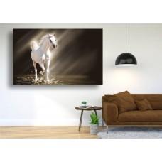 Tablou Canvas Animale Craiova -  Calul alb- Persona Design