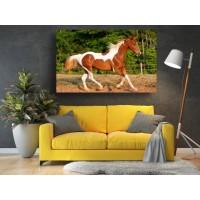Tablou Canvas Animale Craiova -  Calul elegant- Persona Design
