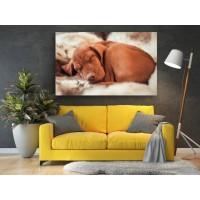 Tablou Canvas Animale Craiova -  Catelul adormit- Persona Design
