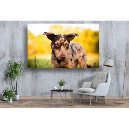 Tablou Canvas Animale Craiova -  Catelul patat- Persona Design