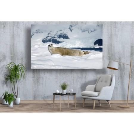 Tablou Canvas Animale Craiova -  Dezmatul alb- Persona Design