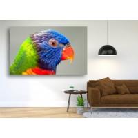 Tablou Canvas Animale Craiova -  Papagaul- Persona Design