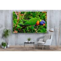 Tablou Canvas Animale Craiova -  Papagalul tricolor- Persona Design