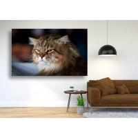 Tablou Canvas Animale Craiova -  Pisicuta fioroasa- Persona Design