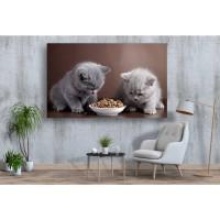 Tablou Canvas Animale Craiova -  Pisicute prietene- Persona Design