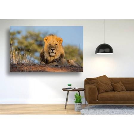 Tablou Canvas Animale Craiova -  Regele leu- Persona Design