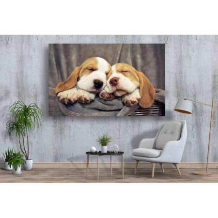 Tablou Canvas Animale Craiova -  Simpaticii- Persona Design