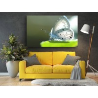 Tablou Canvas Animale Craiova -  Studiu pe fluture- Persona Design