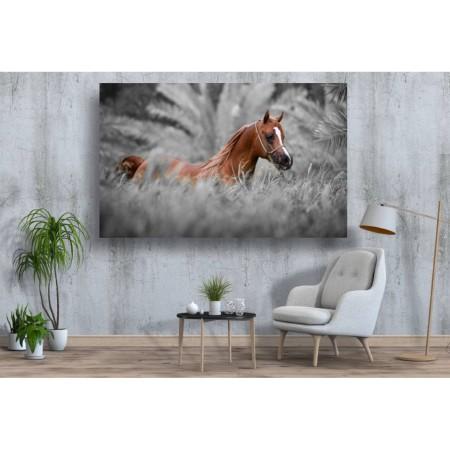 Tablou Canvas Animale Craiova -  Un cal maro- Persona Design