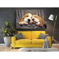 Tablou Canvas Animale Craiova -  Un cos cadou- Persona Design