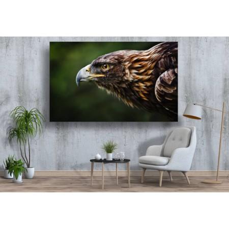 Tablou Canvas Animale Craiova -  Vulturul in atac- Persona Design