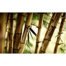Fototapet Abstract Personalizat - Bambus