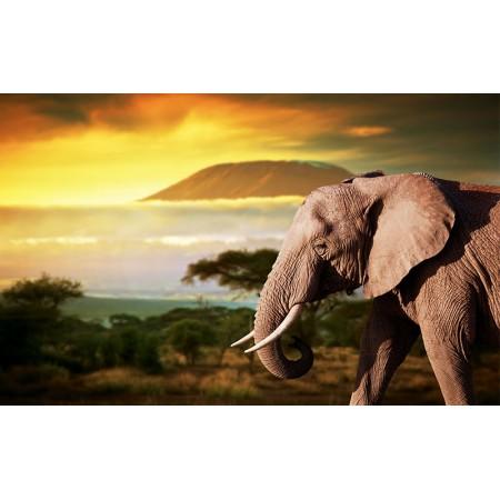 Fototapet Animale Personalizat - Elefant