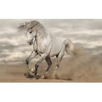 Fototapet Animale Personalizat - Cal Alb