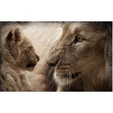 Fototapet Animale Personalizat - Leul