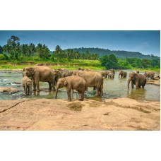 Fototapet Animale Personalizat - Elefanti