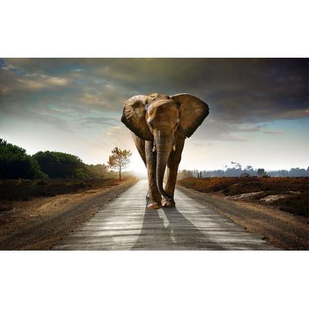 Fototapet Animale Personalizat - Elefantul