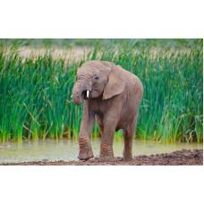 Fototapet Animale Personalizat - Puiul de Elefant