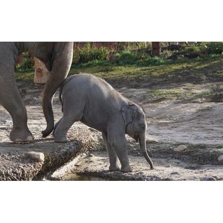 Fototapet Animale Personalizat - Puiul de Elefant 2