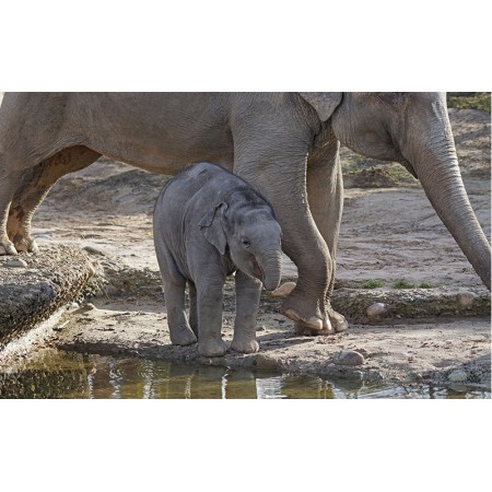 Fototapet Animale Personalizat - Puiul de Elefant 3