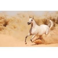Fototapet Animale Personalizat - Calul Alb