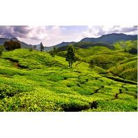 Fototapet Natura Personalizat - Munte Verde