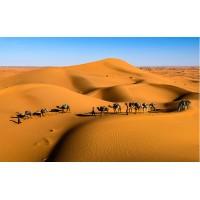 Fototapet Natura Personalizat - Camile in Desert