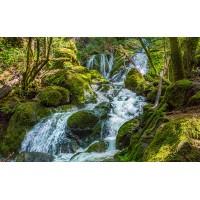 Fototapet Natura Personalizat - Cascada Padure