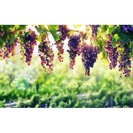 Fototapet Natura Personalizat - Bolta de Vie