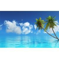 Fototapet Natura Personalizat - Palmieri