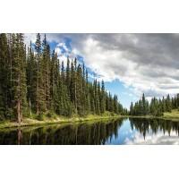 Fototapet Natura Personalizat - Padure de Brazi