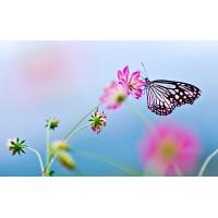 Fototapet Natura Personalizat - Fluture si Flori